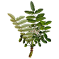 encens oliban bio