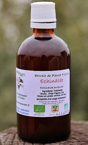 Epf echinacee