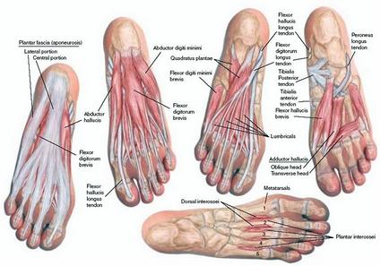 Feetanatomy