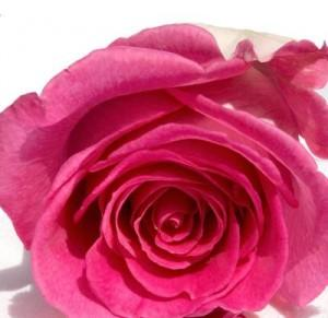 Hydrolat de Rose de Damas Bio